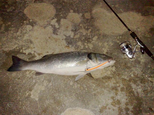 bass3-6kg