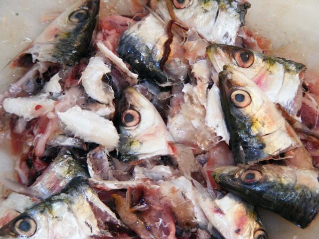 sardine mamci2