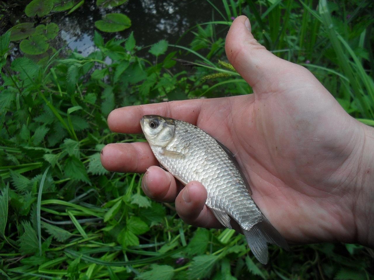 babuska i ribolov babuske